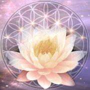 Metaphtysical Day Lotus
